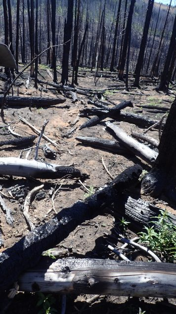 Over the last 19 years, nine major fires have crawled across the Pasayten Wilderness causing massive damage to trails.