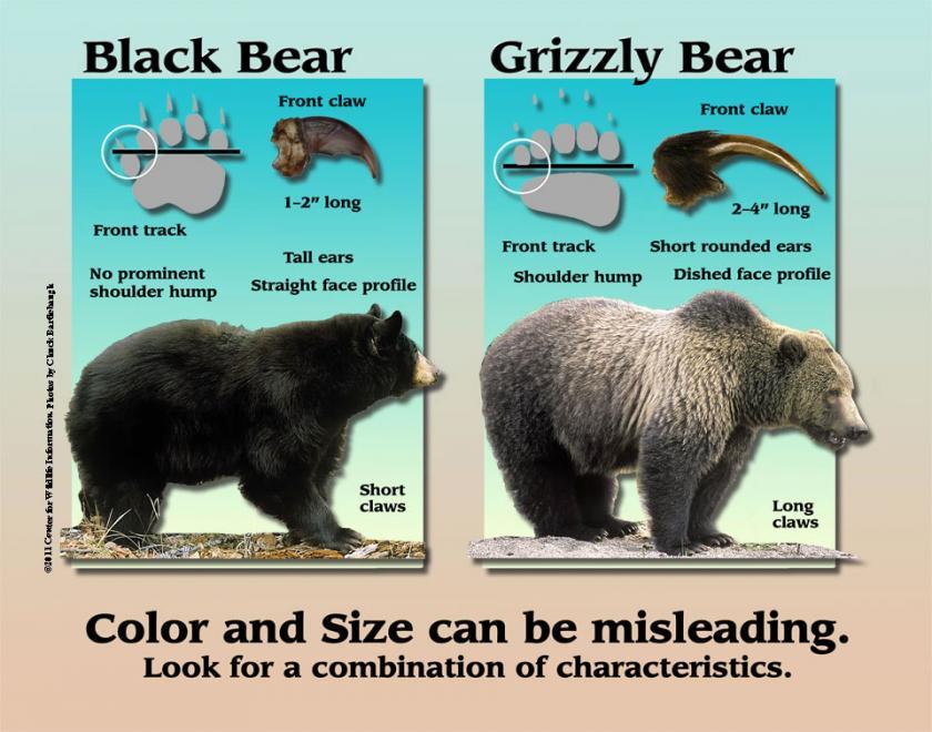 Bear Identification Chart