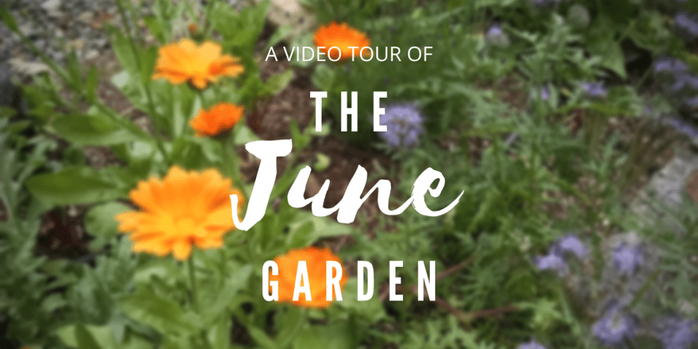 A Video Tour of the PNW Garden in June