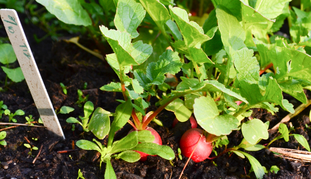 DIY Garden Planting Calendar - Hands Down the Most Time-Saving Section of My Garden Journal - PNW from Scratch_3