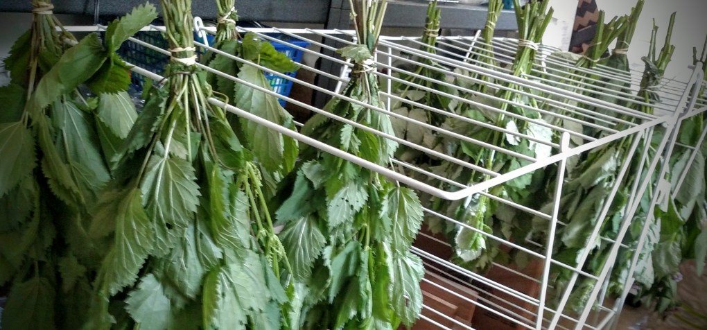 Hanging Herbs to Dry on a Laundry Rack