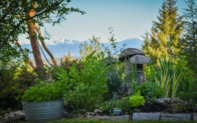 Going on in the PNW from Scratch Organic Garden – May 2016