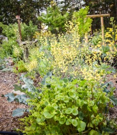 May in the PNWfromScratch Garden 2016_15