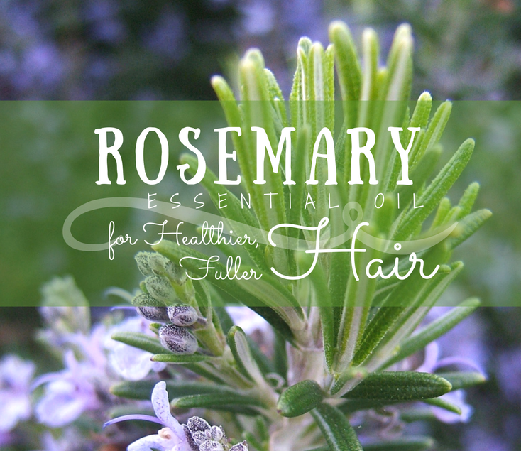 Rosemary Essential Oil for Thicker Hair - Benefits, Safety, Uses and Recipes!