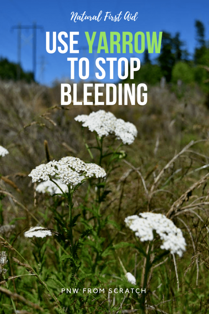 How to Use Yarrow to Stop Bleeding for Natural First Aid