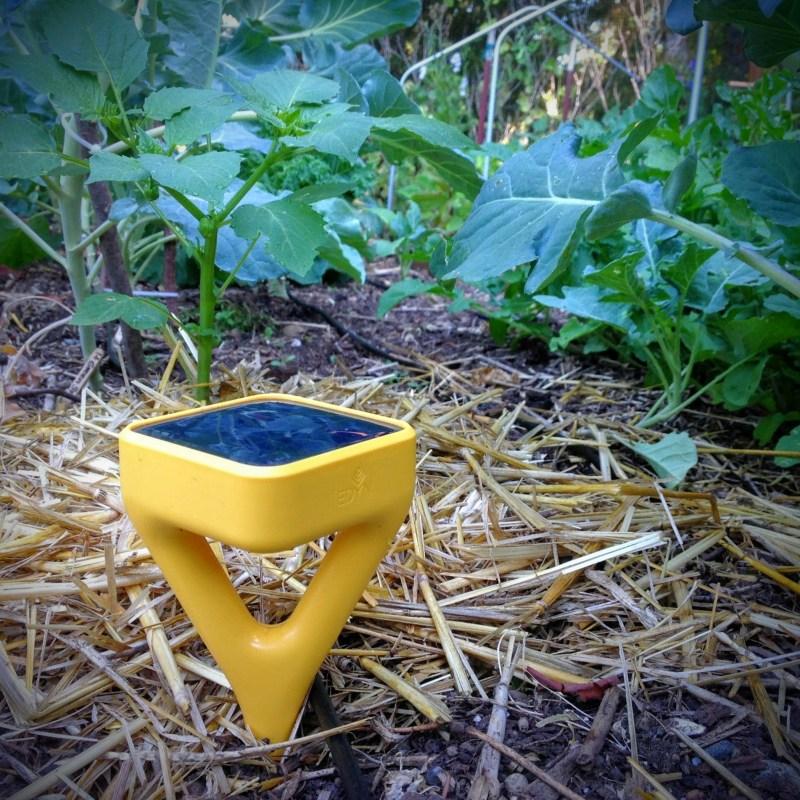 Using the Edyn Garden Sensor