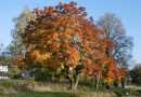 Podzimní krajina, slunné počasí