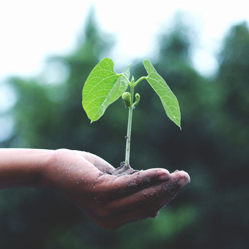 kleiner Baum auf einer Hand