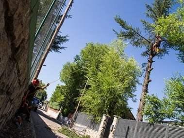 Mantenimiento de árboles Madrid