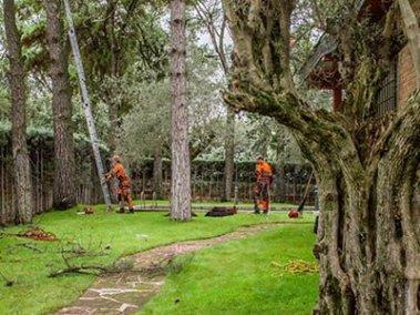 jardines Madrid, mantenimiento