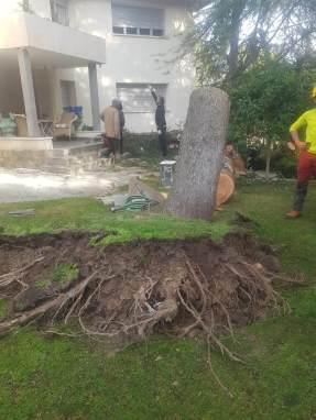 Especialistas en extracción de troncos árboles caídos por vendaval