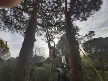 sistemas de cuerdas - seguridad en talas y podas