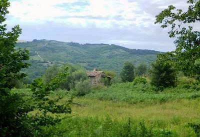19. Casa Olivi dal bosco