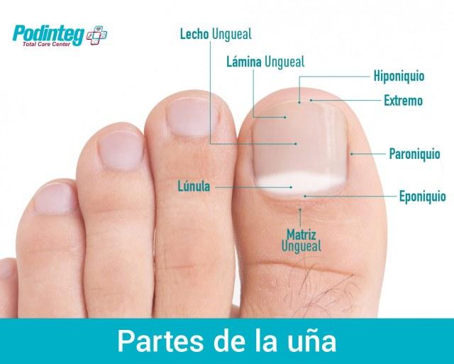 Partes de la uña de los pies