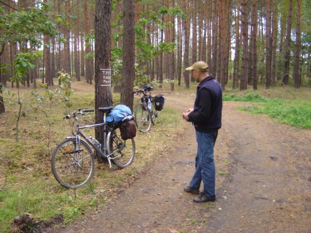 Pszczewski Park Krajobrazowy - Lasy w okolicach Trzciela