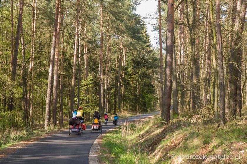 Droga przez żnińskie lasy