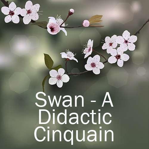Swan - A Didactic Cinquain