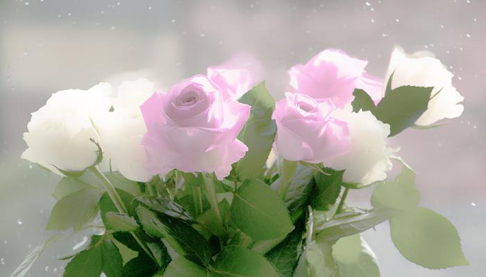 Healing Words, Roses - Gil Dekel