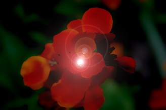 The Birth of the Flower Star - by © Gil Dekel, 2011.