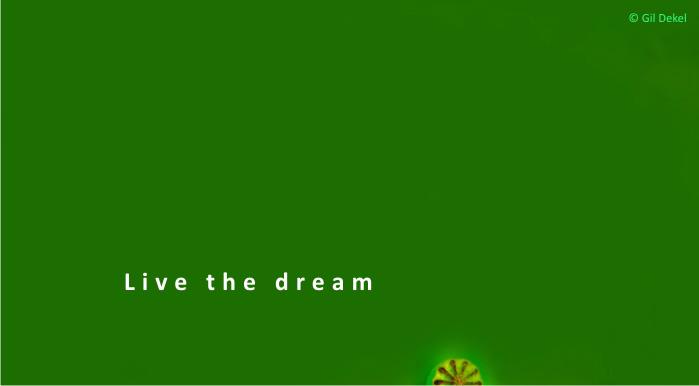 The Dream (artwork by © Gil Dekel)