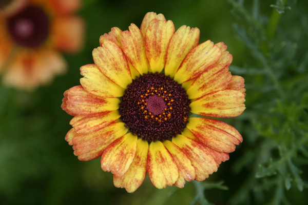 Orange Yellow Nature - Photo by Gil Dekel.