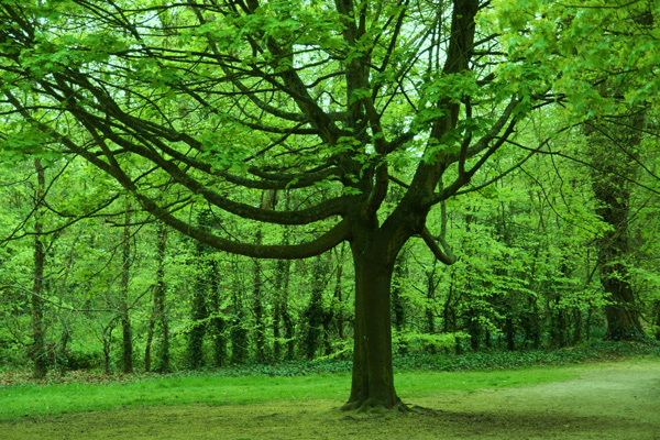Tree in Green, Nature - Photo by Gil Dekel.
