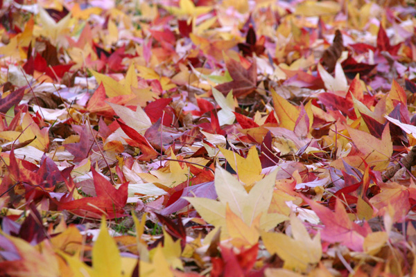 The Leaves Carpet, Nature - Photo by Gil Dekel.