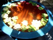 Bowl of Serenity (photo © Yaron Dekel, 2013)