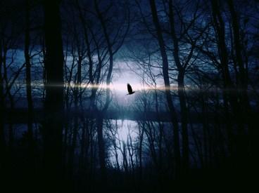 bird-blue