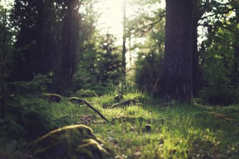 forest-magic-green-tree