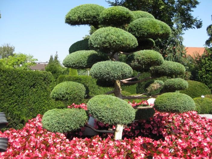japanese-garden-2