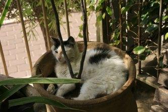 A cat... Israel. (Photo: Gil Dekel, 2019).