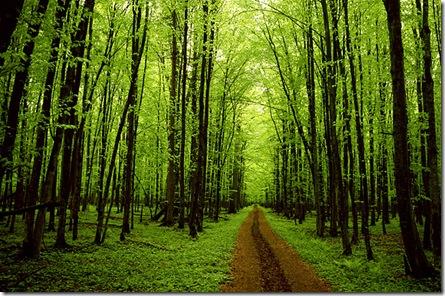 franklin_trees_01