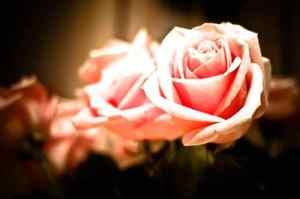 Whisper_of_Love