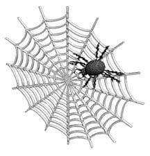 spider web - Intricate Web of Life