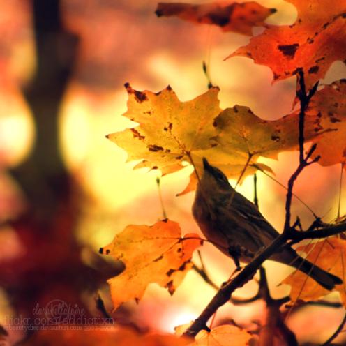 autumn_song_