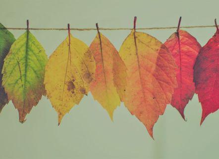 Autunm leaves