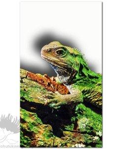 new zealand tuatara art print