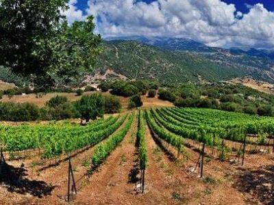 Antonopoulos Vineyards | Peloponnese wines | The Vineyards of Peloponnese | Peloponnese Wine Region | Peloponnese Wine Roads | Wines and Grape Varieties of Peloponnese | Peloponnese wineries | Wines from the Peloponnese