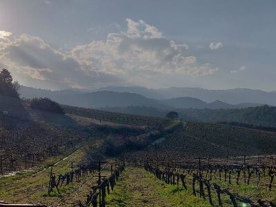 Gioulis Domaine   Peloponnese wines   The Vineyards of Peloponnese   Peloponnese Wine Region   Peloponnese Wine Roads   Wines and Grape Varieties of Peloponnese   Peloponnese wineries   Wines from the Peloponnese
