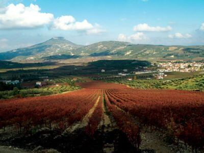 Palivos Estate | Peloponnese wines | The Vineyards of Peloponnese | Peloponnese Wine Region | Peloponnese Wine Roads | Wines and Grape Varieties of Peloponnese | Peloponnese wineries | Wines from the Peloponnese