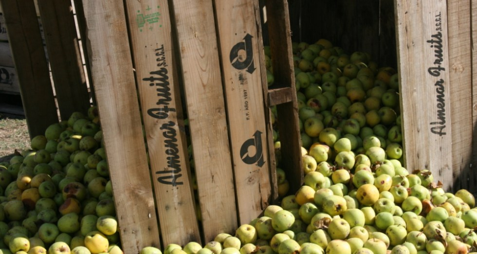 Apples in the countryside of Spain, Costa Brava