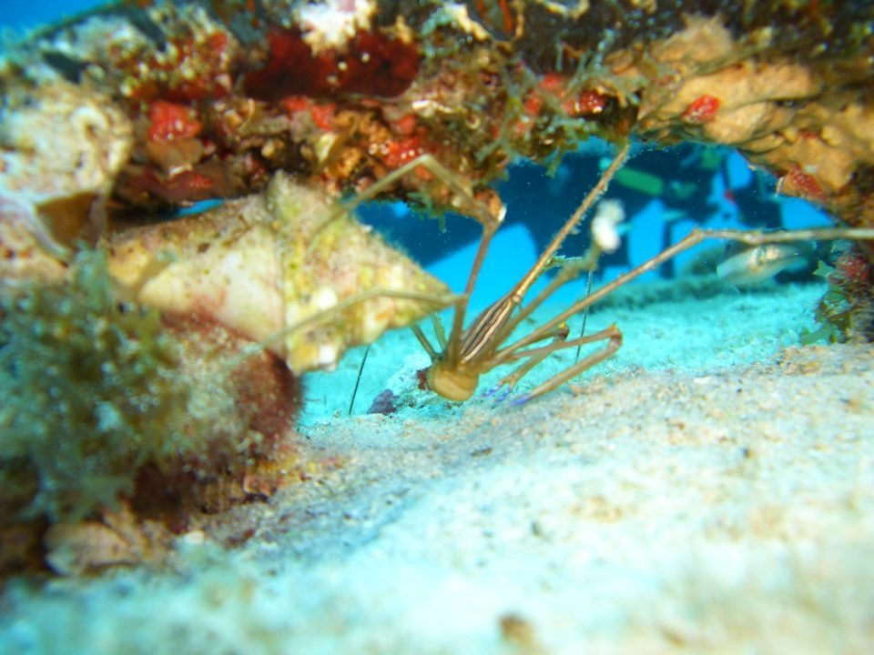 Under the Sea, Belize