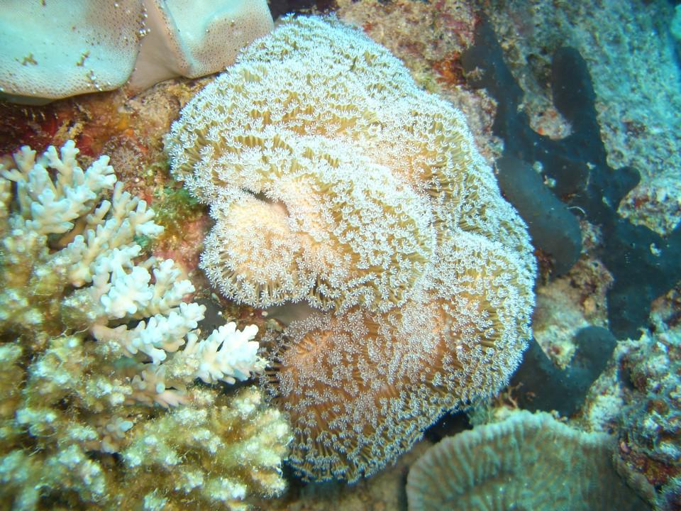 More amazing Coral near castaway island fiji