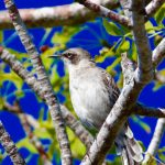 The Galapagos Islands – Birds of a Feather