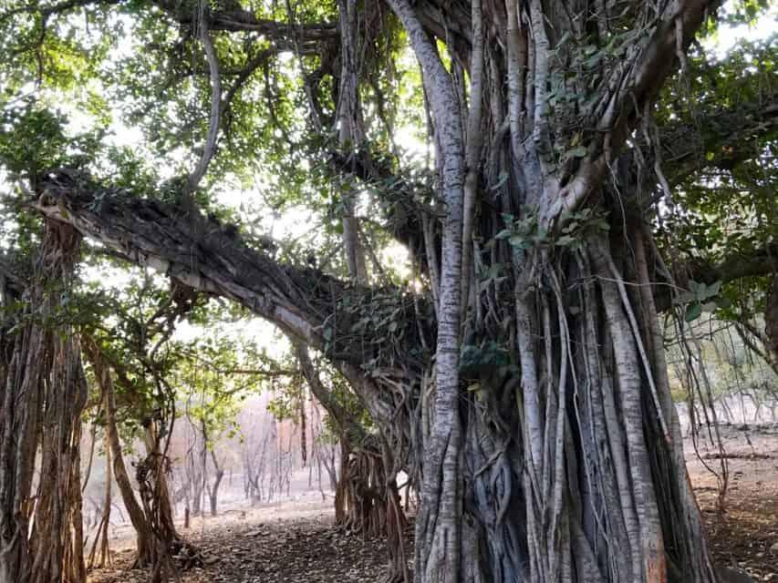 Amazing jungle lodges and resorts