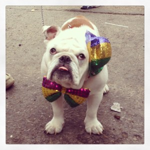 This guy is ready for Mardi Gras!
