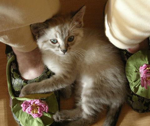 Angelica-on-Mom's-feet