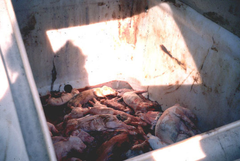 dead-pig-container