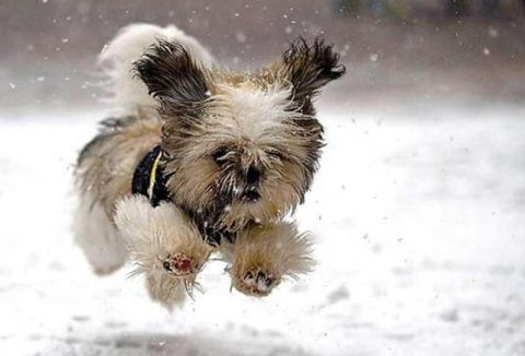 cute puppy running in the snow